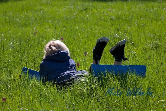 Blomstudier, Kvinna på liggunderlag njuter av kungsängsliljor, Uppsala. Foto: Mats Wilhelm / Naturfotograferna / IBL Bildbyrå.