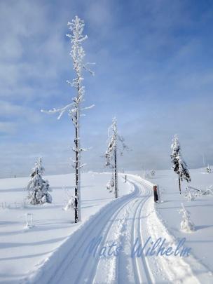 Motlut över hygge, Hälsingland. Foto: Mats Wilhelm / Naturfotograferna / IBL Bildbyrå.;