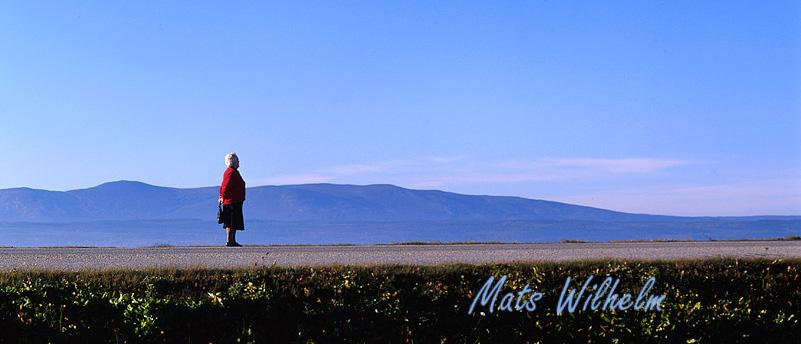 Tant som väntar på bussen i Jämtland. Foto: Mats Wilhelm / Naturfotograferna / IBL Bildbyrå.
